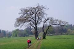 Near Ettington