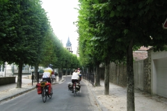 Classic tree lined French road