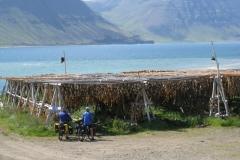 Fish drying near Flateyri
