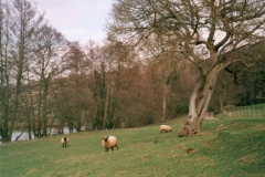 Pastoral Scenery in Wye Valley
