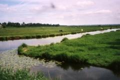 Pastureland near Bayeux