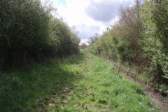 A rarely ridden bridle path