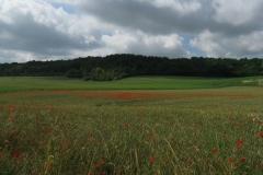 Poppy fields on the way to Rambouillet